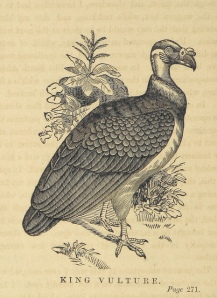 Bird image from the British Library.